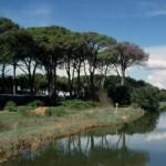 Il Comune di Viareggio ha aperto nel Parco di Migliarino San Rossore un itinerario accessibile ai disabili