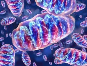Mitocondriali