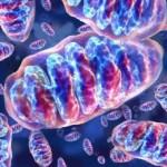 """San Benedetto del Tronto (AP): il 4 Luglio 2009 si terrà un convegno sulle """"Malattie Mitocondriali"""""""
