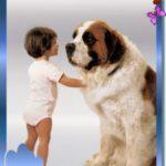 La Pet Therapy impiegata nei disturbi dell'autistico